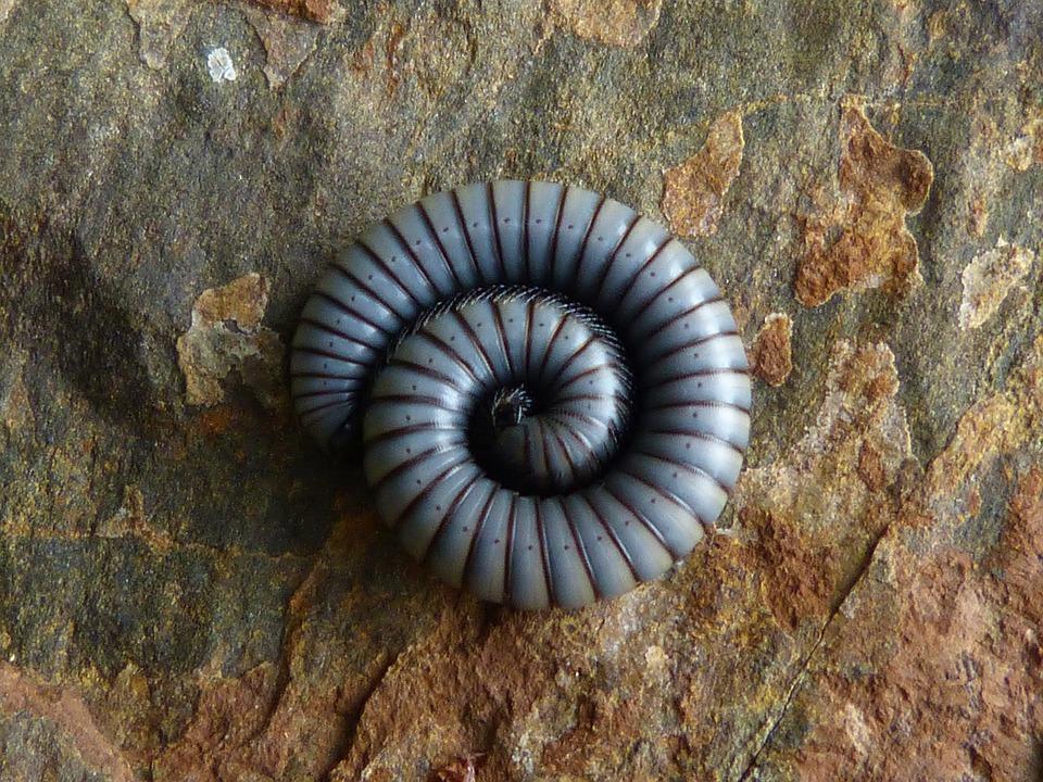 Worm, Spiral, Rock