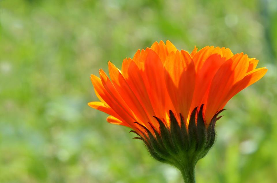Flower, Color Orange, Flora, Worry