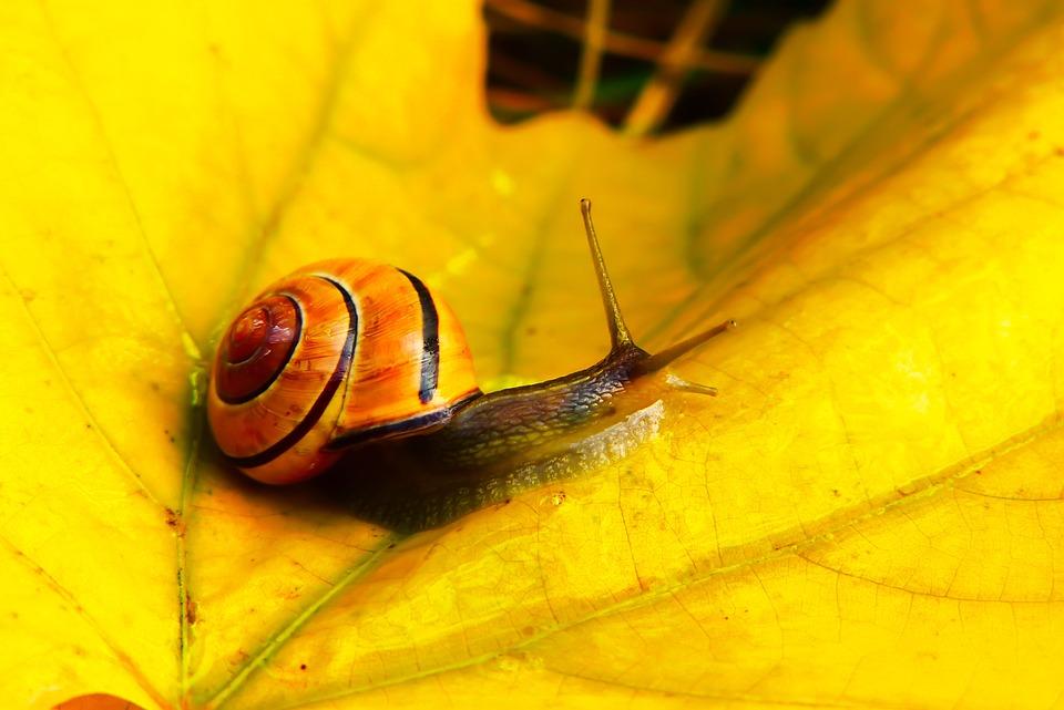 Wstężyk Huntsman, Molluscum, Leaf, Autumn