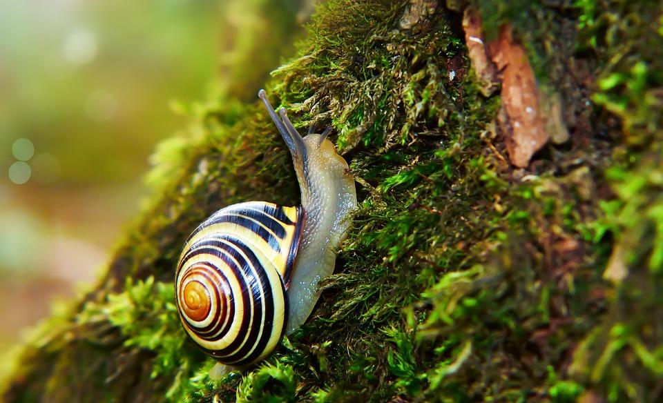 Wstężyk Huntsman, Molluscum, Moss, Tree, Forest