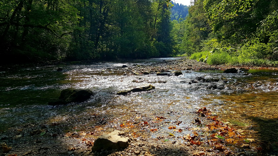 River, Wutach, Wutach Gorge, Nature, Water, Forest