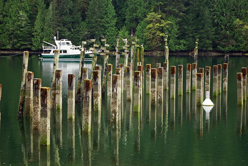 Boat, Nature, Yacht, Forest, Sea, Trees, Outdoors