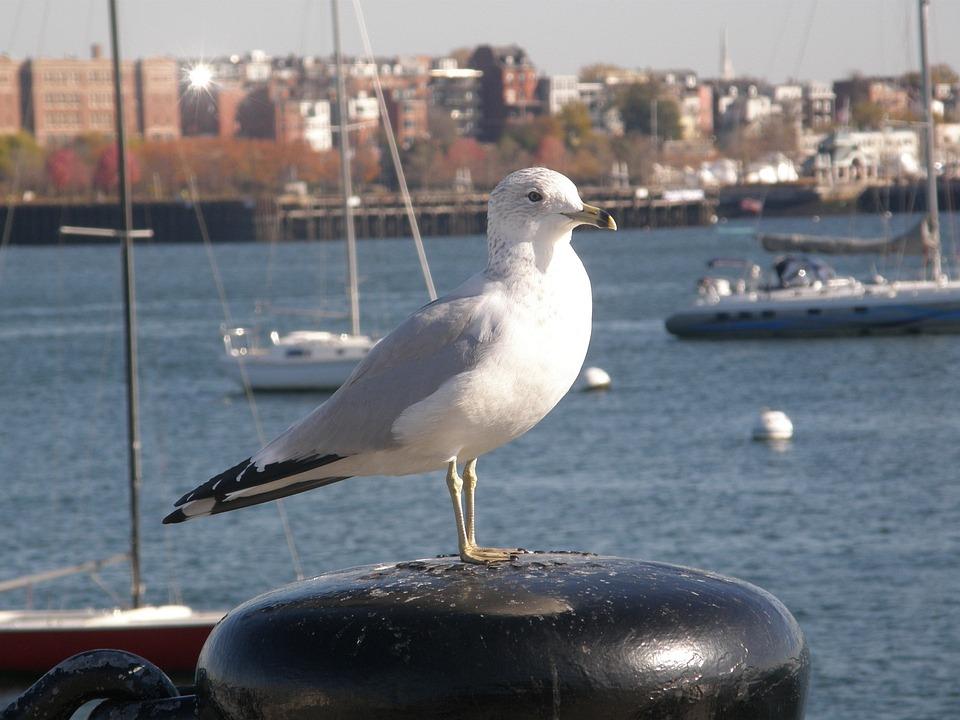 City, Stump, Sitting, Harbor, Buoys, Stop, Yachts, Bird