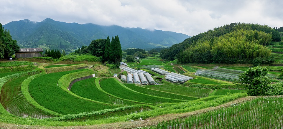 Japan, Kumamoto, Natural, Yamada's Rice Fields, Rice
