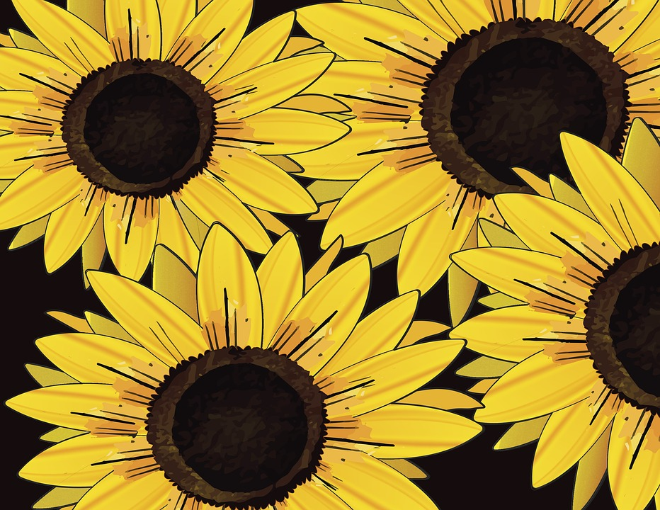 Sunflower, Illustration, Yellow, Art, Design