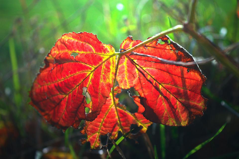 Leaf, Autumn Colours, Red, Yellow, Leaves, Fall Color