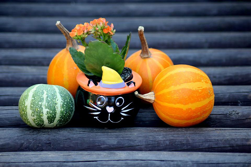 Pumpkins, Decoration, Autumn, Halloween, Yellow, Orange