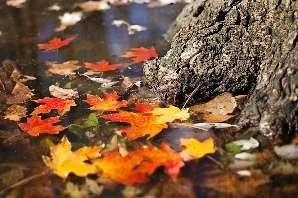 Autumn, Fall, Leaves, Orange, Yellow, Season