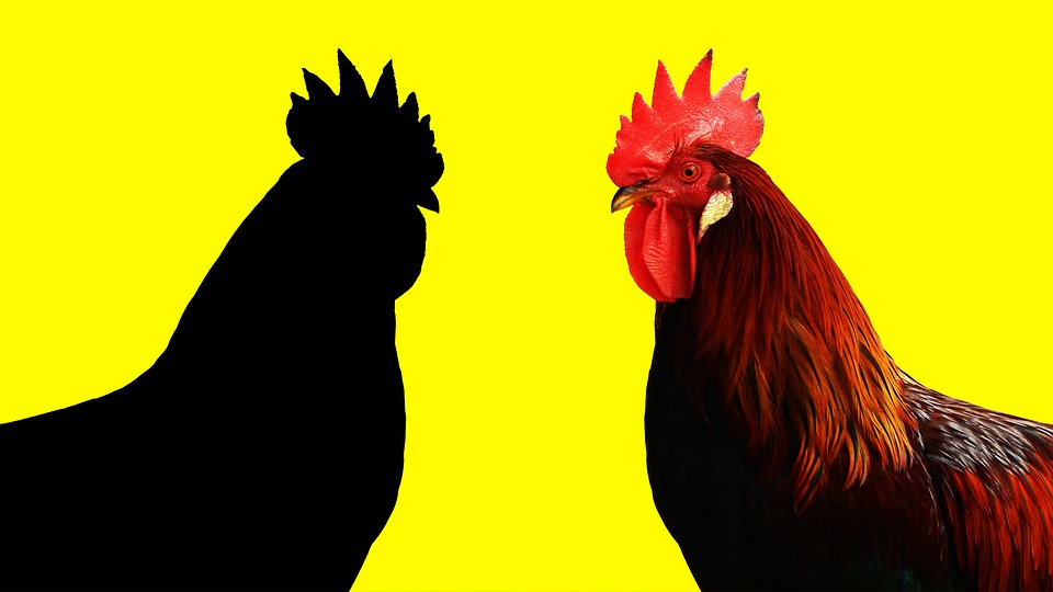 Cock, Year Of The Rooster, Yellow Background, Animal
