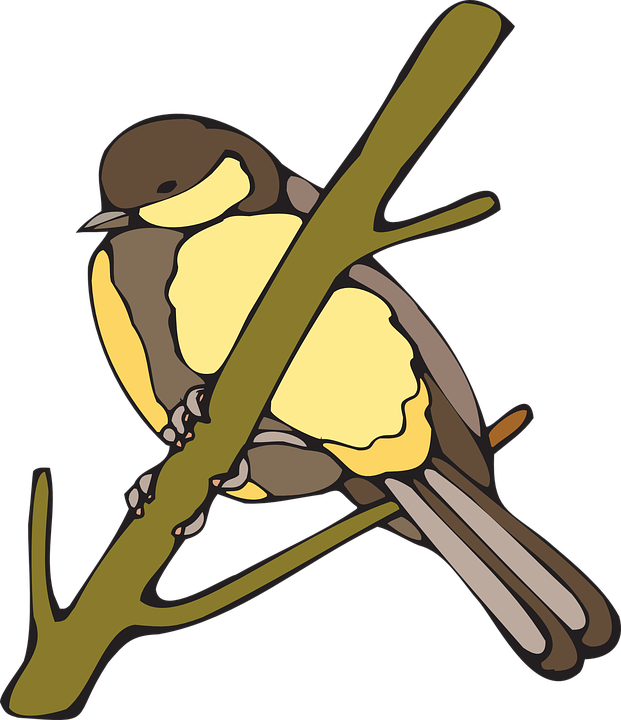 Yellow, Bird, Branch, Nut, Hatch, Wings, Beak, Feathers