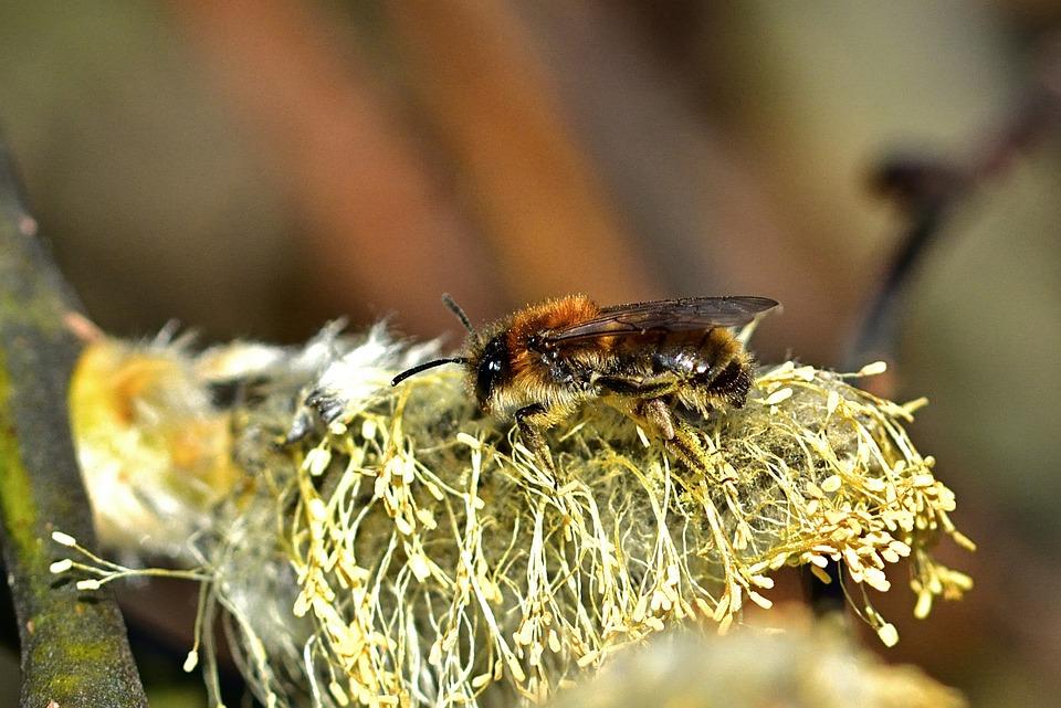 Spring, Garden, Bee, Close Up, Pollen, Yellow