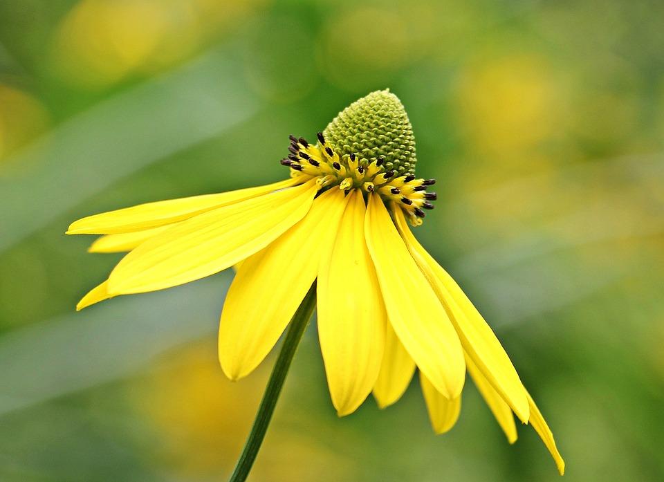 Sun Brews, Flower, Blossom, Bloom, Bloom, Yellow