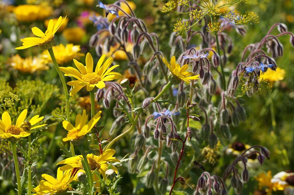 Flower Meadow, Yellow, Summer, Field Of Flowers, Bloom