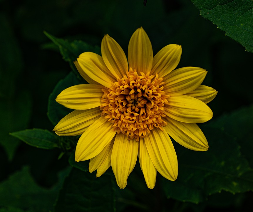 Flower, Yellow, Bloom, Petals, Leaves, Nature