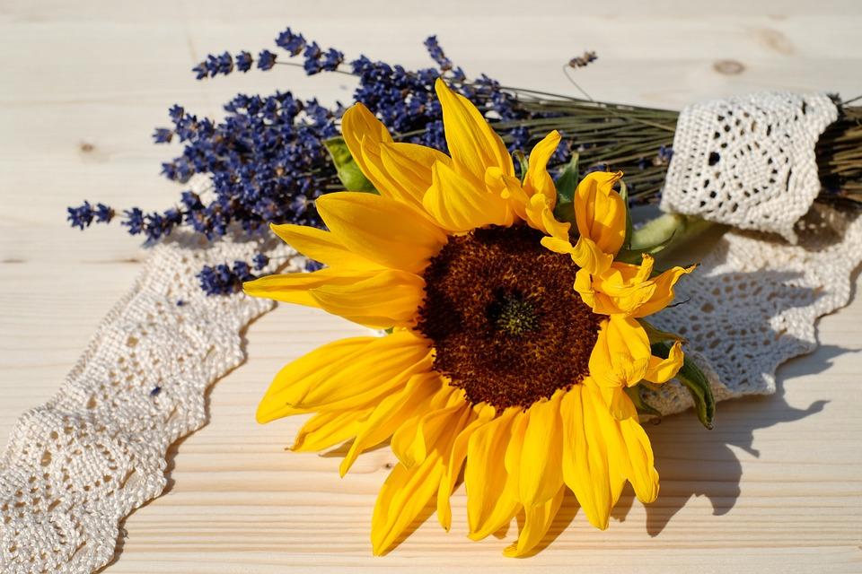 Sun Flower, Blossom, Bloom, Yellow, Yellow Flower