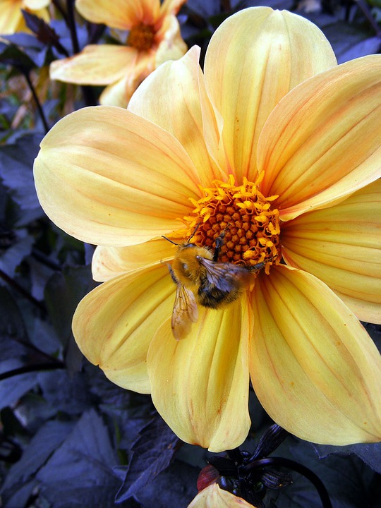 Flower, Yellow, Bee, Insects, Blossom, Macro