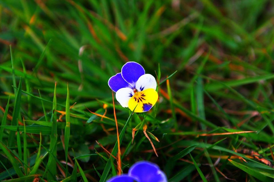 Flower, Close, Nature, Blue, White, Yellow, Blossom