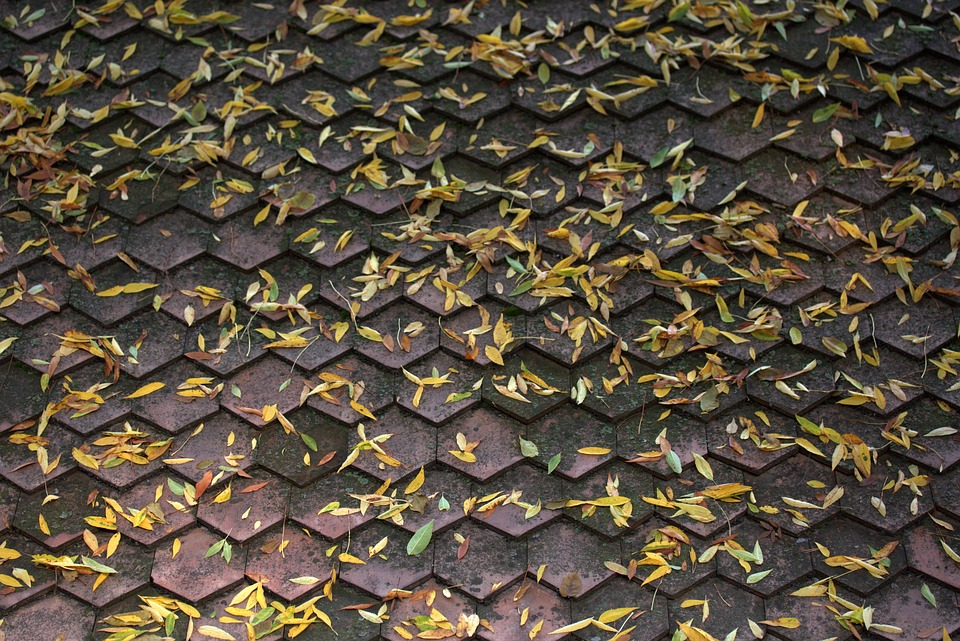Roof, Leaves, Yellow, Autumn, Building