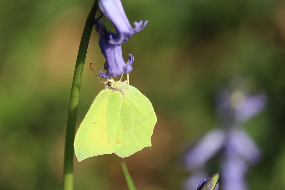 Flower, Wild Flower, Yellow Butterfly, Butterfly