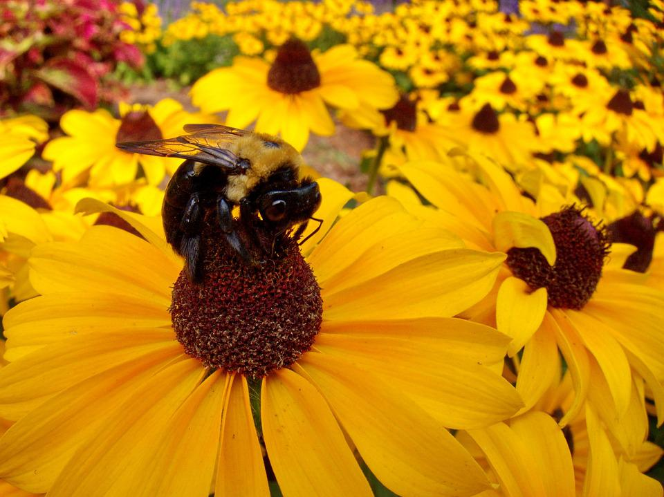 Bumble Bee, Flower, Yellow, Colorful, Bees, Daisy