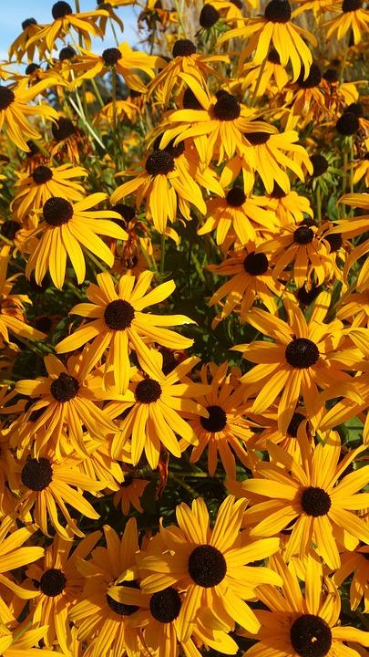 Daisy, Daisies, Orange, Yellow, Summer, Flowers, Fresh