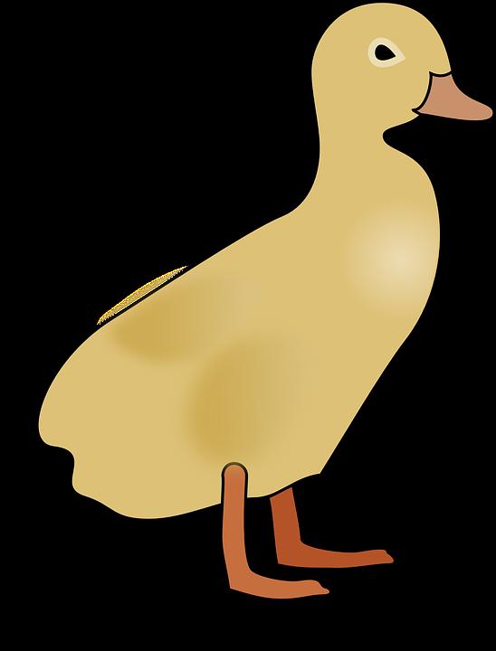 Duckling, Duck, Baby, Yellow, Standing, Ducky, Webbed