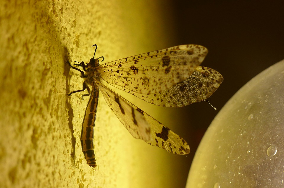 Insect, Evening, Yellow, Nature, Summer, Macro