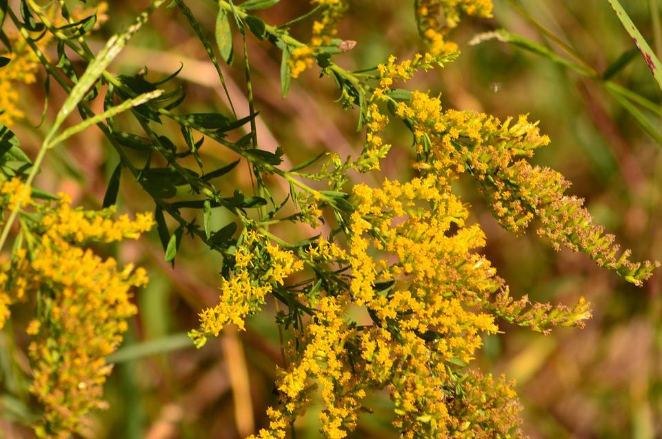 Fall, Autumn, Nature, Flowers, Yellow, Bold, Vivid