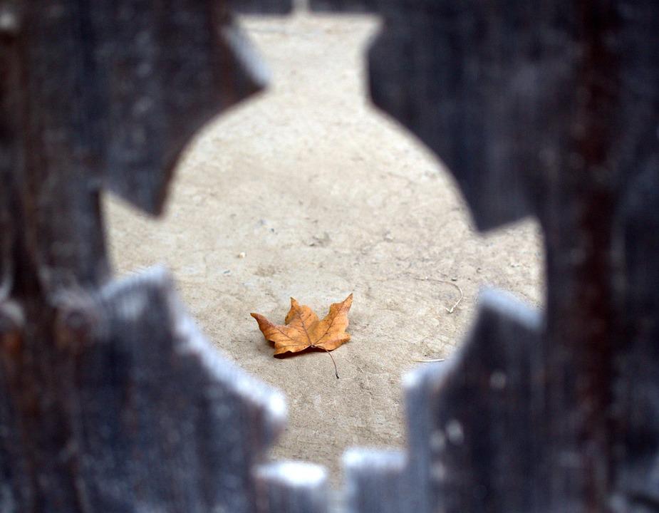 Leaf, Yellow, Dry, Fall, Ground