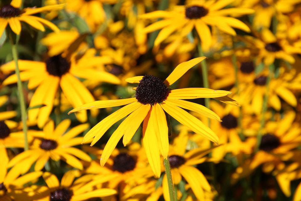 Flowers, Yellow, Yellow Flower, Field