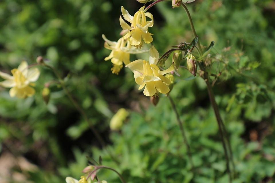 Flower, Yellow, Flora, Canada