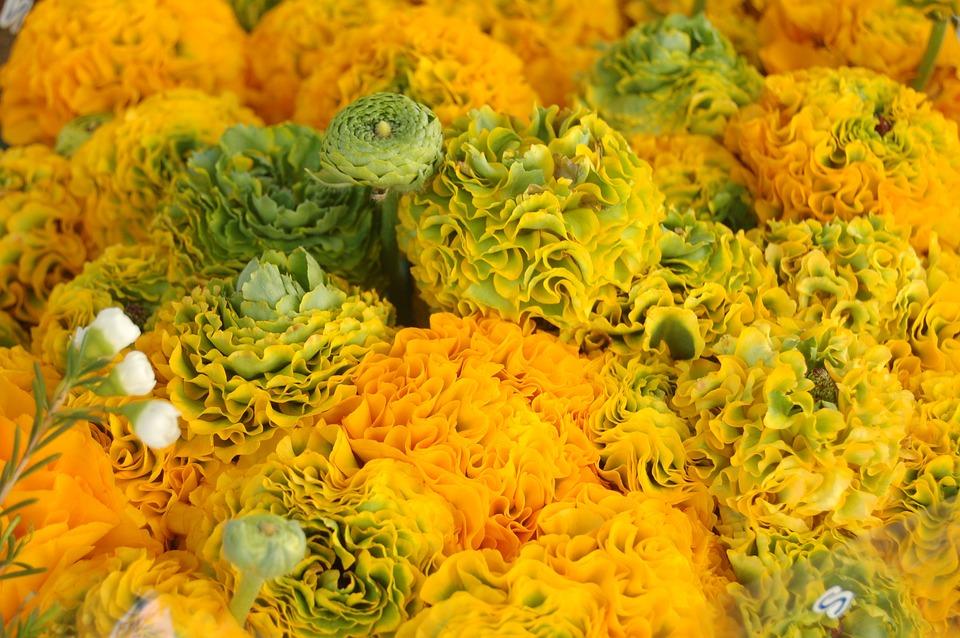 Nature, Yellow, Flower, Spring, Yellow Flower, Bloom