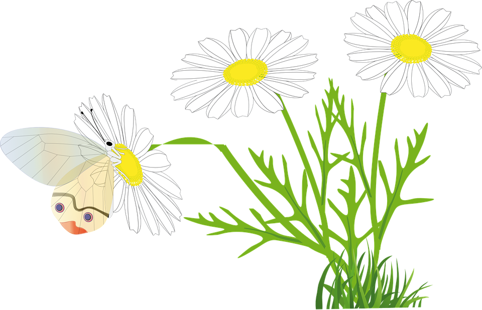 Flower, Butterfly, Yellow Flower, Chamomile