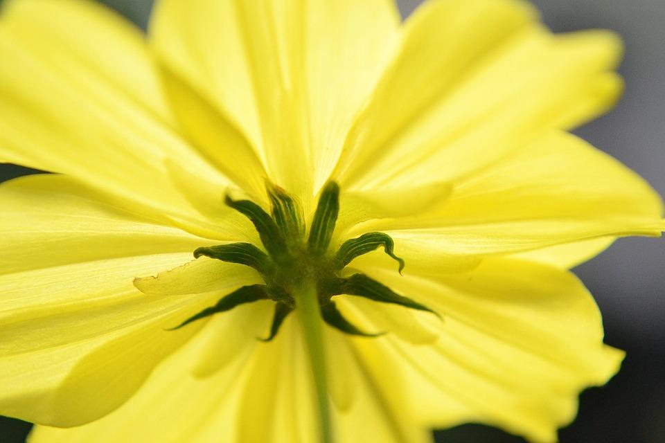 Under, Under A Flower, Nectar, Flower, Yellow Flower