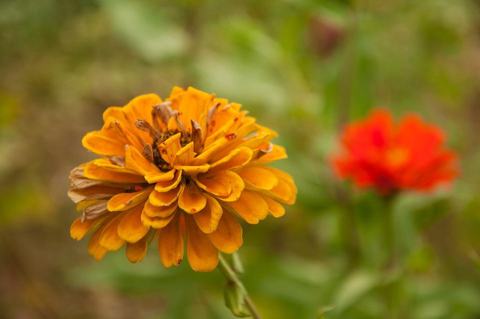 Flower, Plant, Material, Photograph, Yellow Flower