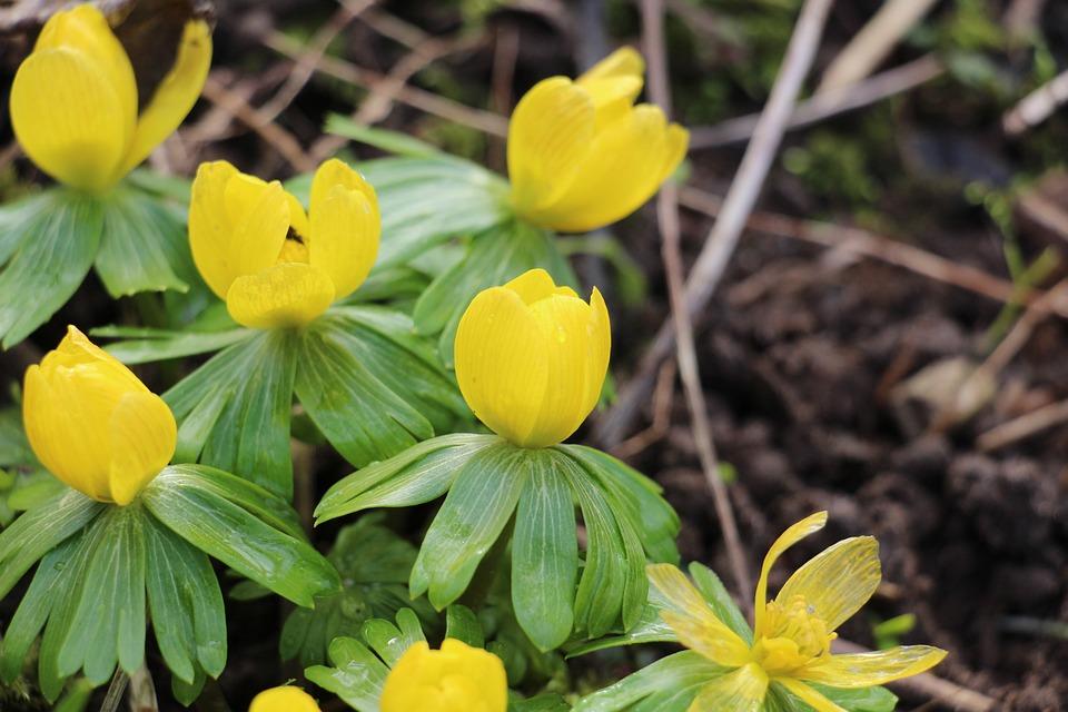 Flower, Nature, Spring, Yellow Flower