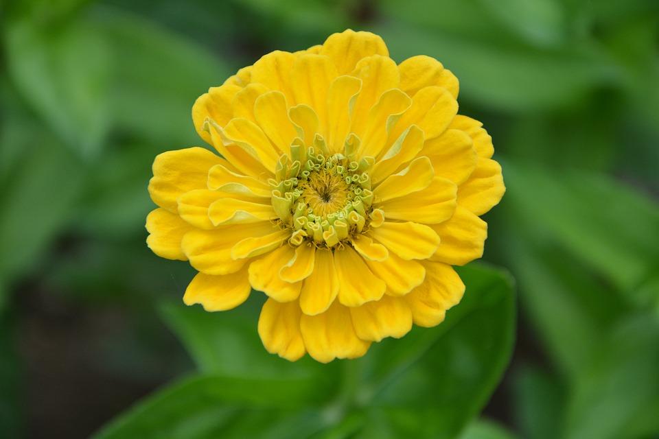 Yellow Flower, Garden, Flower, Flowering