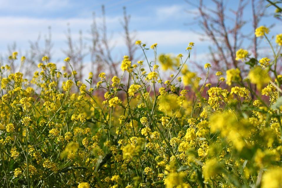 Flowers, Yellow, Wild, Nature, Plant, Flower