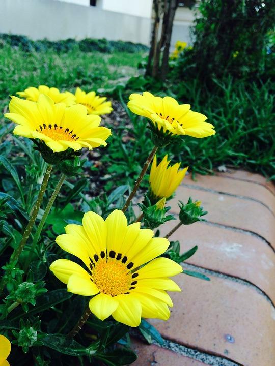 Public Garden, Yellow Flower, Garden