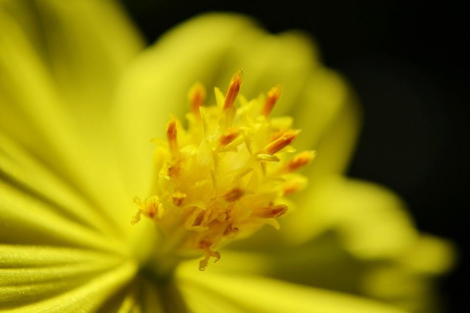 Nectar, Flower, Yellow Flower, Center Of A Flower