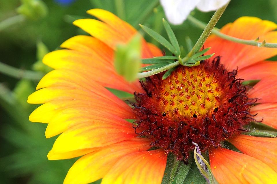 Flower, Yellow Flower, Pistils, Petals, Yellow Petals