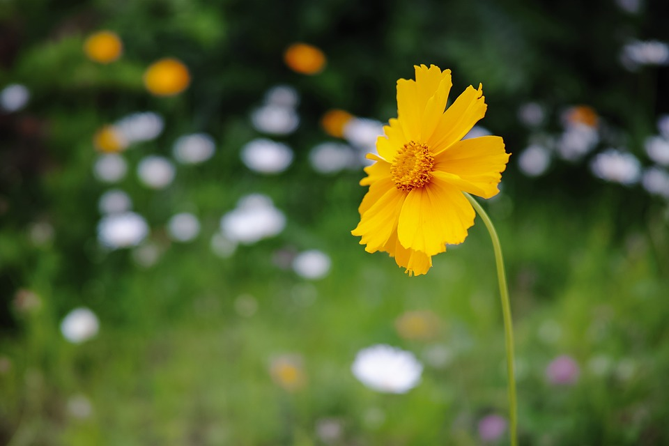 Flower, Yellow, Scenery