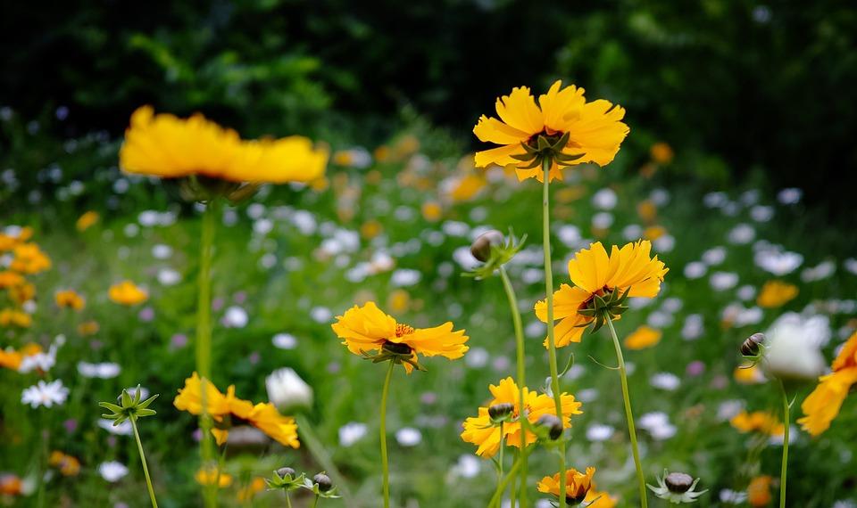 free photo yellow flower scenery max pixel