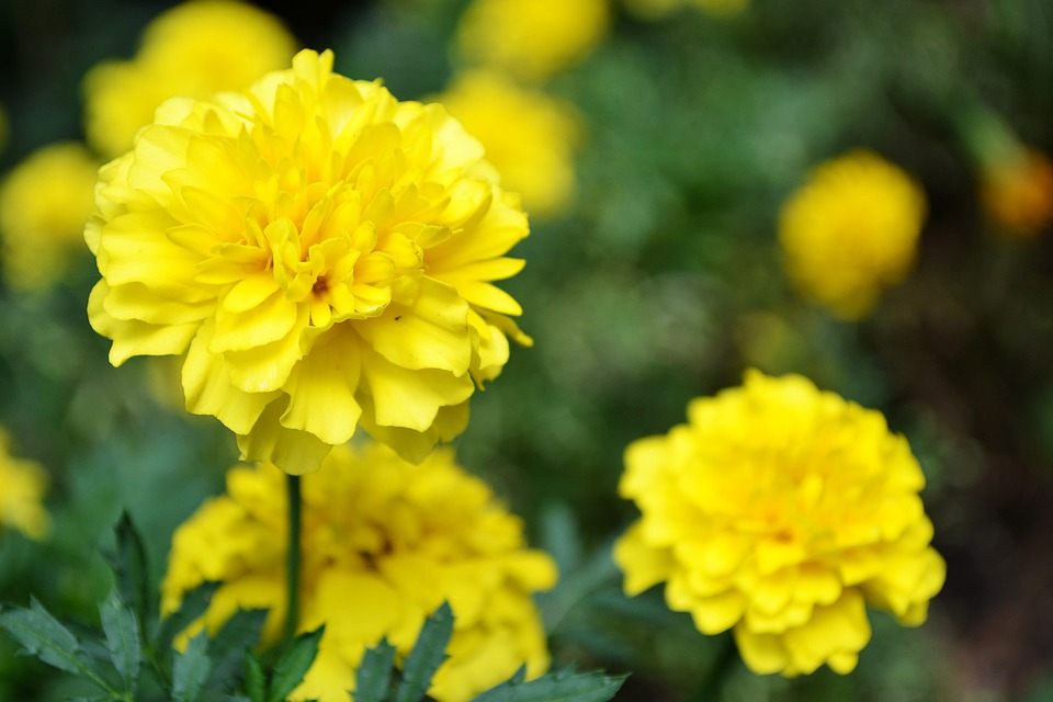 Free Photo Yellow Flower Small Flowers Garden Flowers Flowers Max