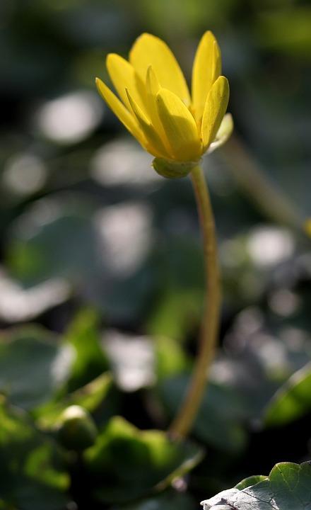 Flower, Yellow, Plant, Spring, Petals