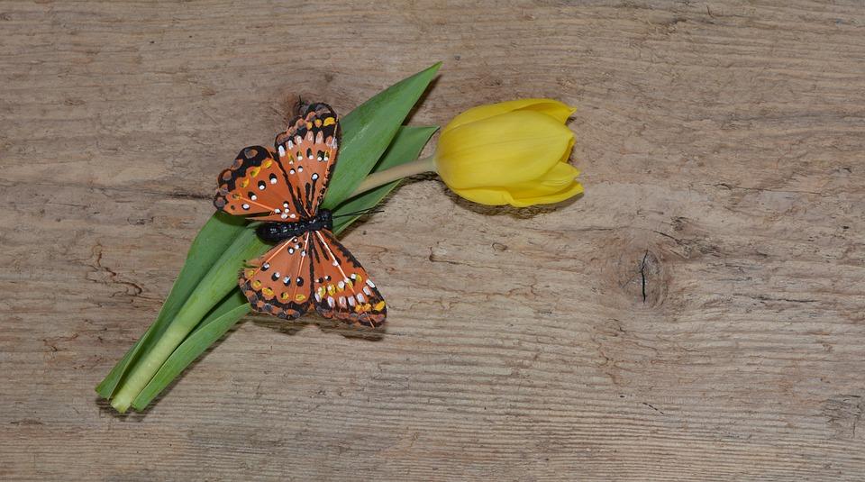 Flower, Tulip, Schnittblume, Yellow, Yellow Flower