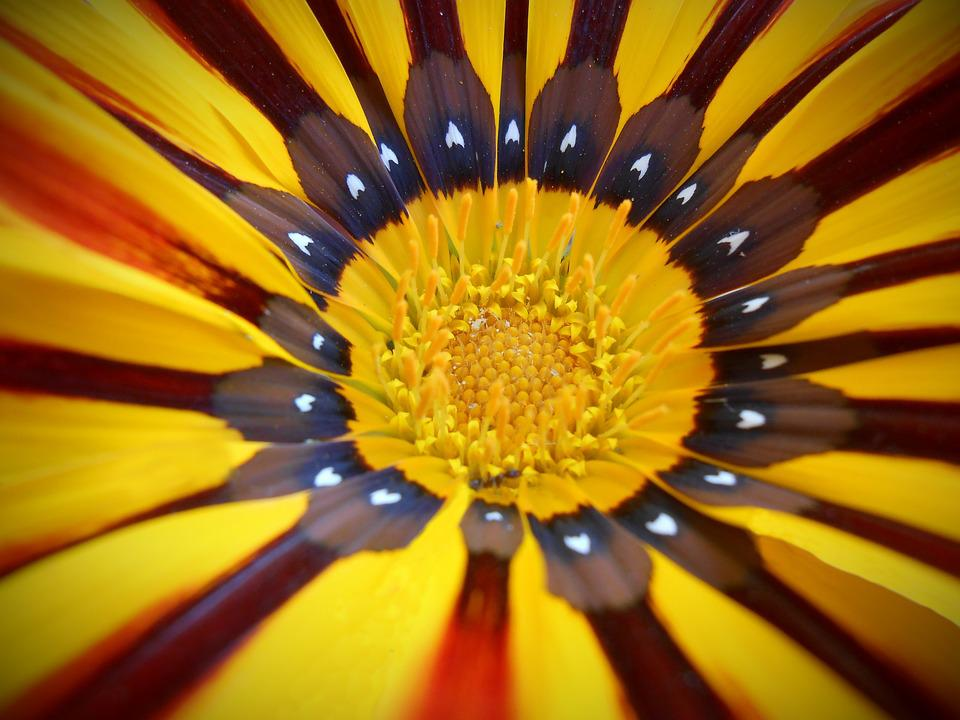 Flower, Yellow, Yellow Flower, Macro, Nature, Stripes