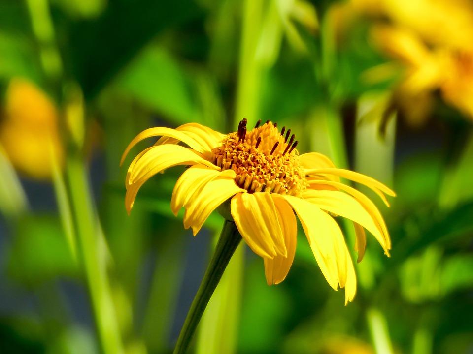 Flower, Summer, Yellow, Yellow Flower, Summer Flower