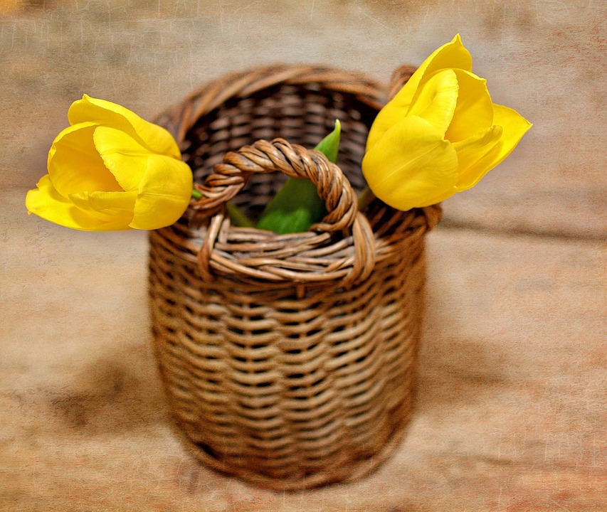 Tulips, Flowers, Yellow, Yellow Flowers, Cut Flowers