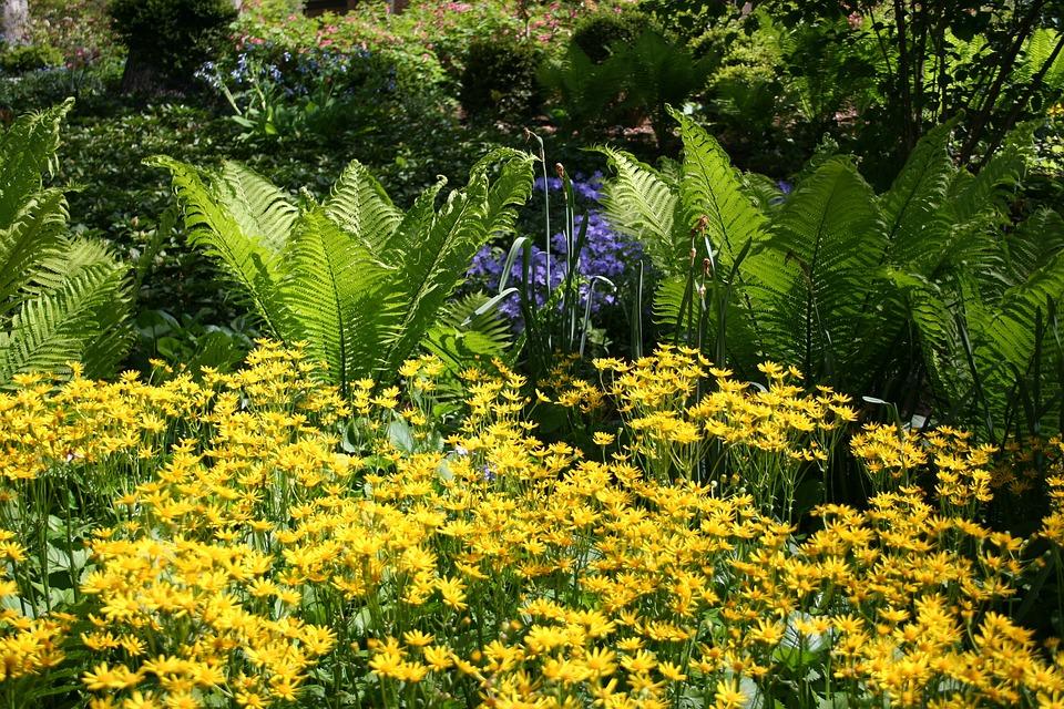 Summer Garden, Hosta, Yellow Flowers